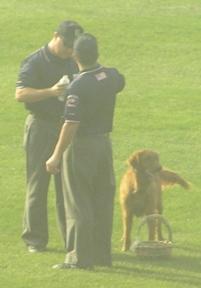 louisvilledog