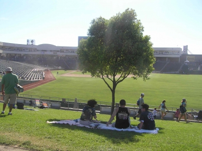 sacramentotree